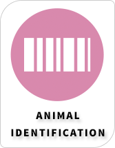 BiosebLab - Categories - Animal identification